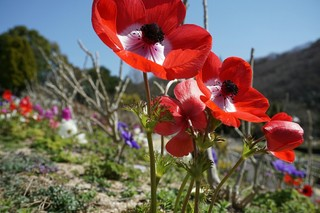 赤い花1.jpg